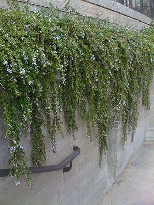 Tar Paper Crane A Remodeling Blog Landscaping Retaining Walls Wall Climbing Plants Garden Landscape Design