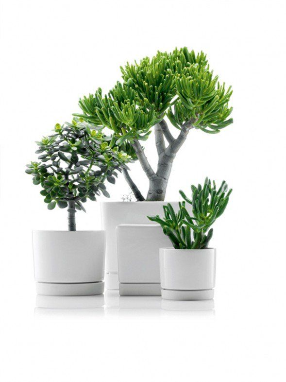 Wonderful Amazing Futuristic P*T For Your Small Gardening 400 x 300