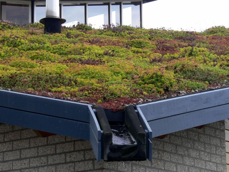 Architektur Umweltfreundliche Dachbegrunung Sind Die Grundacher Die Zukunft Architektur Dachbegrunu Flachdach Begrunung Dachbegrunung Grune Architektur
