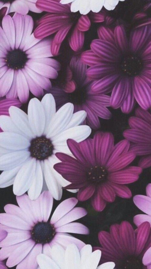 flowers, wallpaper, and pink kép   color    purple ...