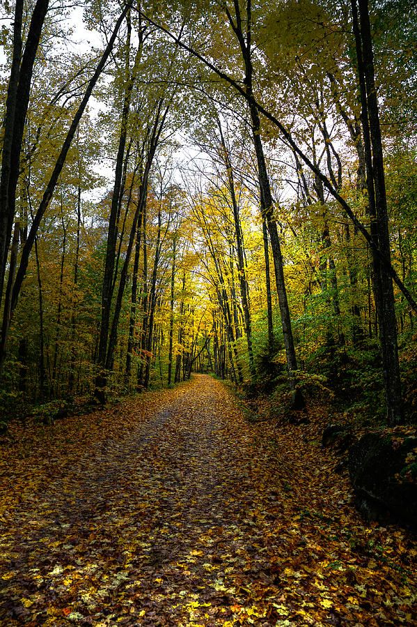 A sempre uma escolha, a sempre um caminho que as folhas do chão vão me indicar...