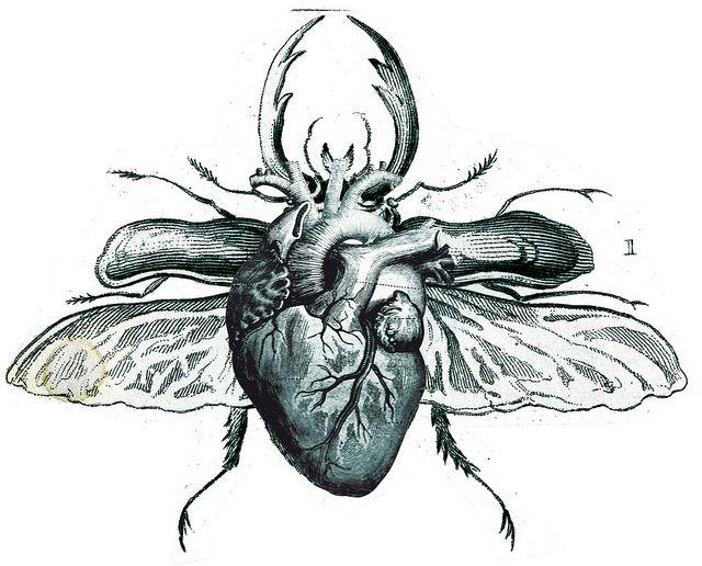 hearttle   coeur   Pinterest   Körperteile, Anatomisch und Herzchen