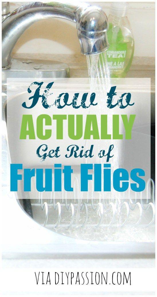 how to get rid of fruit flies vinegar trick