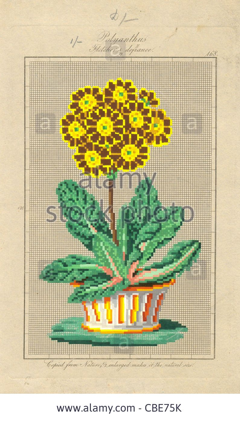 Download this stock image  Berlin wool work pattern for Polyanthus  Fletcher s defiance - CBE75K from Alamy s library of millions of high  resolution stock ... 05173a1f67ed1