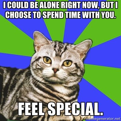Introvert Cat - I could be alone right now, but I choose to spend time with you. Feel Special.