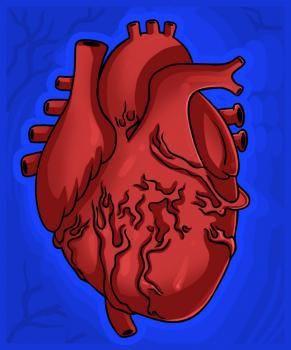 تعلم الرسم كيف ارسم قلب حقيقي تعلم رسم قلب أعزاءنا في هذا الدرس الشيق سنتعلم كيفية رسم قلب بشري حقيقي خطوة بخطوة Human Heart Drawing Human Heart Guided Drawing