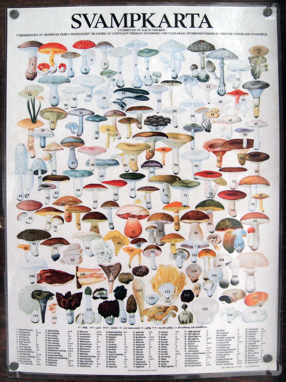 mushrooms poster | MUSHROOMS | Pinterest | Mushrooms and Posters