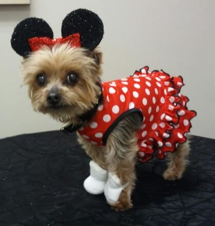 Tinkerbell As Minnie Mouse Dorothy Dog Costume Dog Halloween