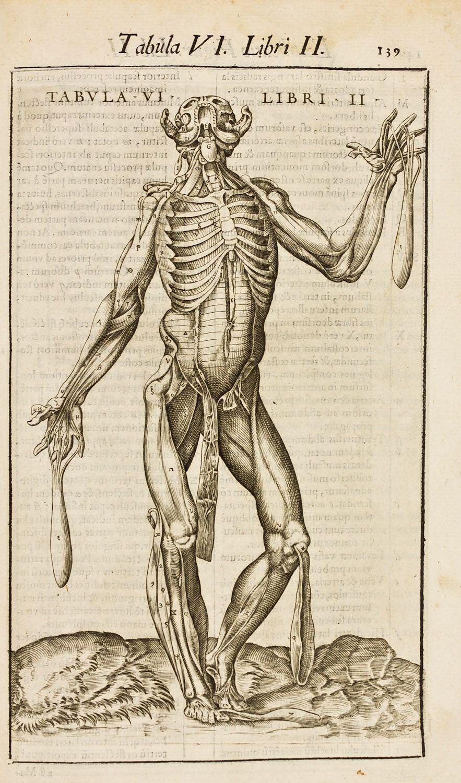 Anatomie Corps Humain Homme beatrizet, nicolas (1510?-1577?). graveur ; [ecorché d'homme avec