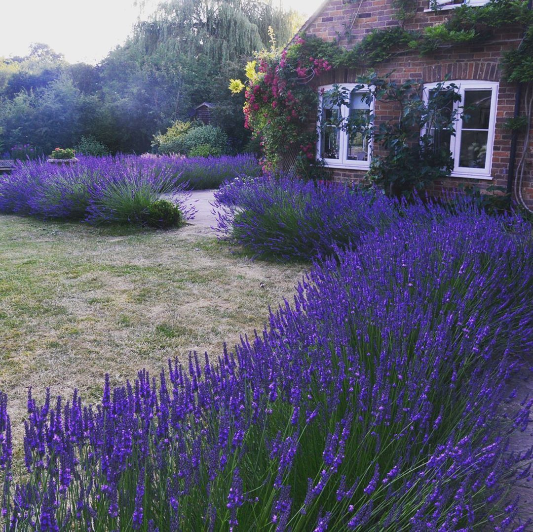 Anya Lautenbach S Instagram Profile Post I Propagated About 85 Of All Plants Currently Growing In Our Garden Including All The Lavender I Propagated By Hard
