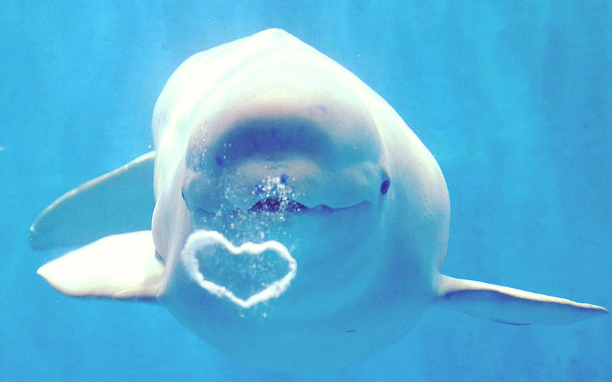Image result for dolphins blowing heart