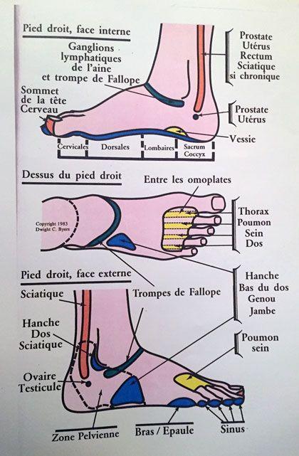 La r flexologie plantaire est une m decine douce qui for Douleur interieur du pied
