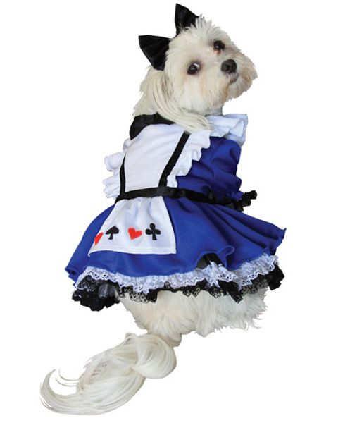 Alice In Wonderland Halloween Dog Costume Pet Costumes Dog