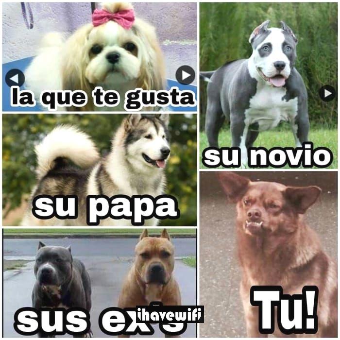 Pin By Loka On Gaming Memes Memes Cat Memes Funny Spanish Memes