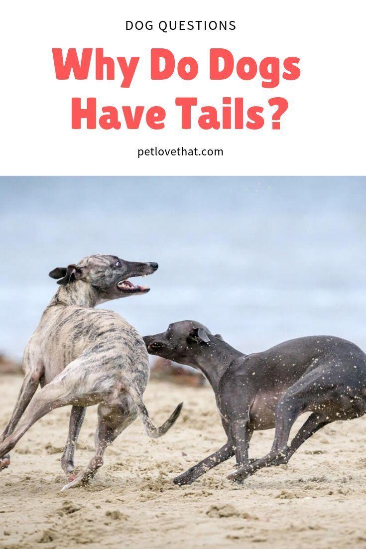11+ What animals don t have bones ideas