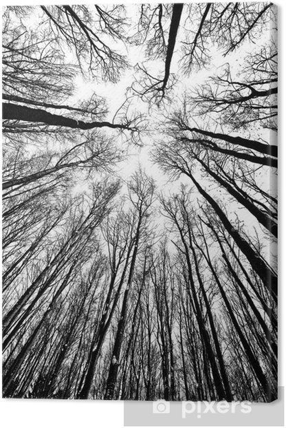 black and white trees silhouettes Canvas Print • Pixers® - We live to change