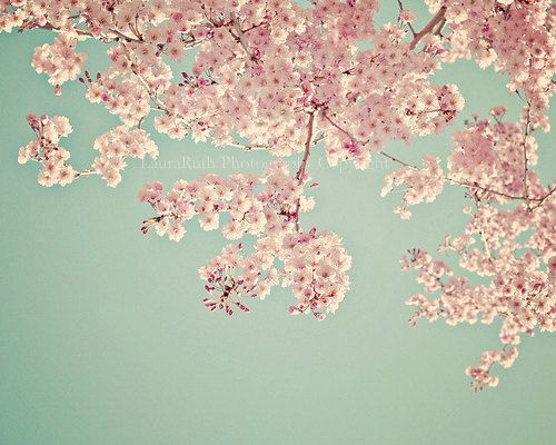 50 Off Sale Cherry Blossom Tree Nature Photography Baby Etsy Blossom Trees Cherry Blossom Tree Flowers Photography