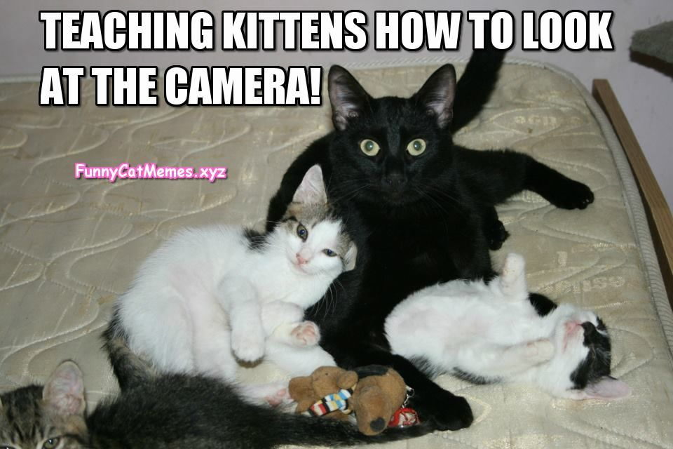 Related Image Cat Memes Cat Birthday Memes Cat Quotes Funny