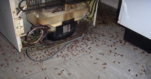 Como Acabar Con La Plaga De Cucarachas Chiquitas Lo Mas Efectivo Para Eliminar Las Cucarachas Del Hogar Para