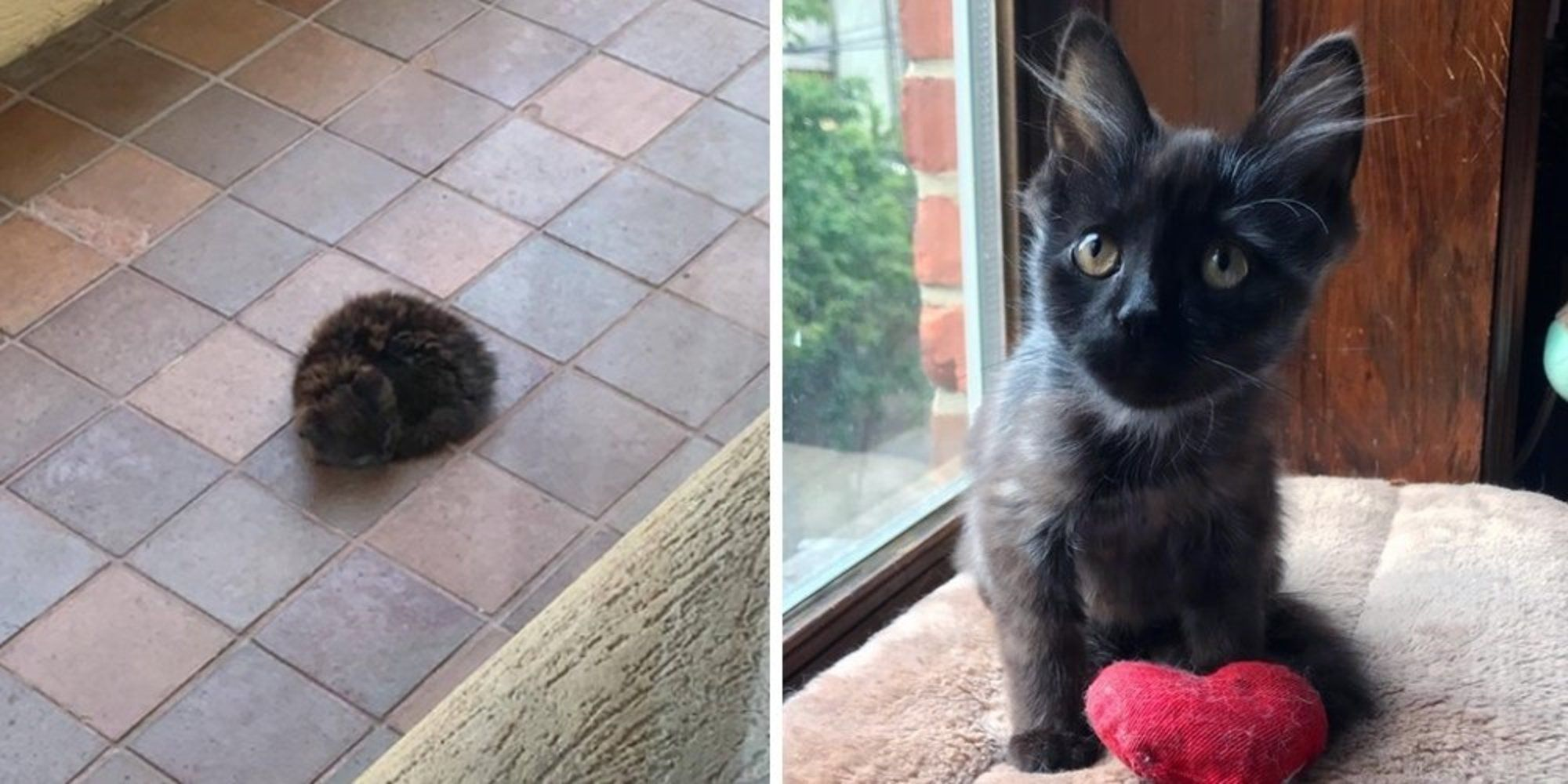 Kitten Who Was Found Sleeping Outside Alone Is So Happy Now That He Is Loved Love Meow Kitten Cats And Kittens Kitten Rescue