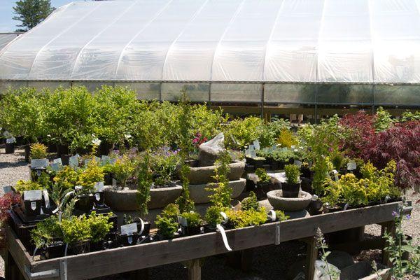 Gilbertie\'s Herb Gardens -- 7 Sylvan Lane -- Westport CT ...