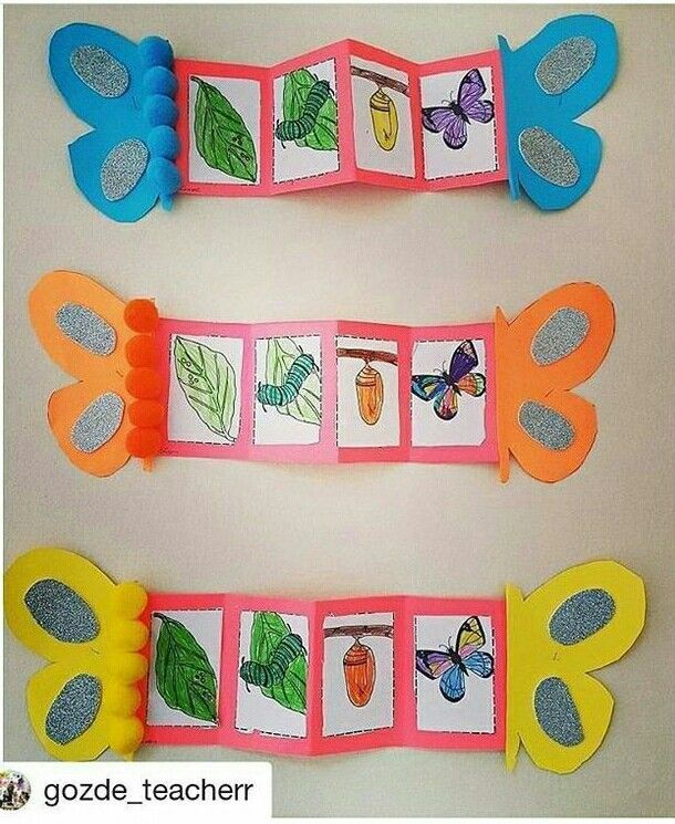 Life Cycles Preschool - Nature And Society