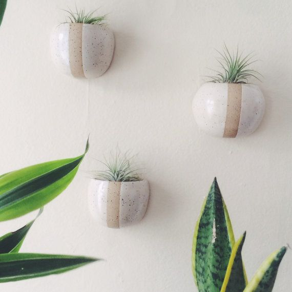 Cigar Planter Wall Accent: White And Tan Decorative, Functional Ceramic Wall Planter