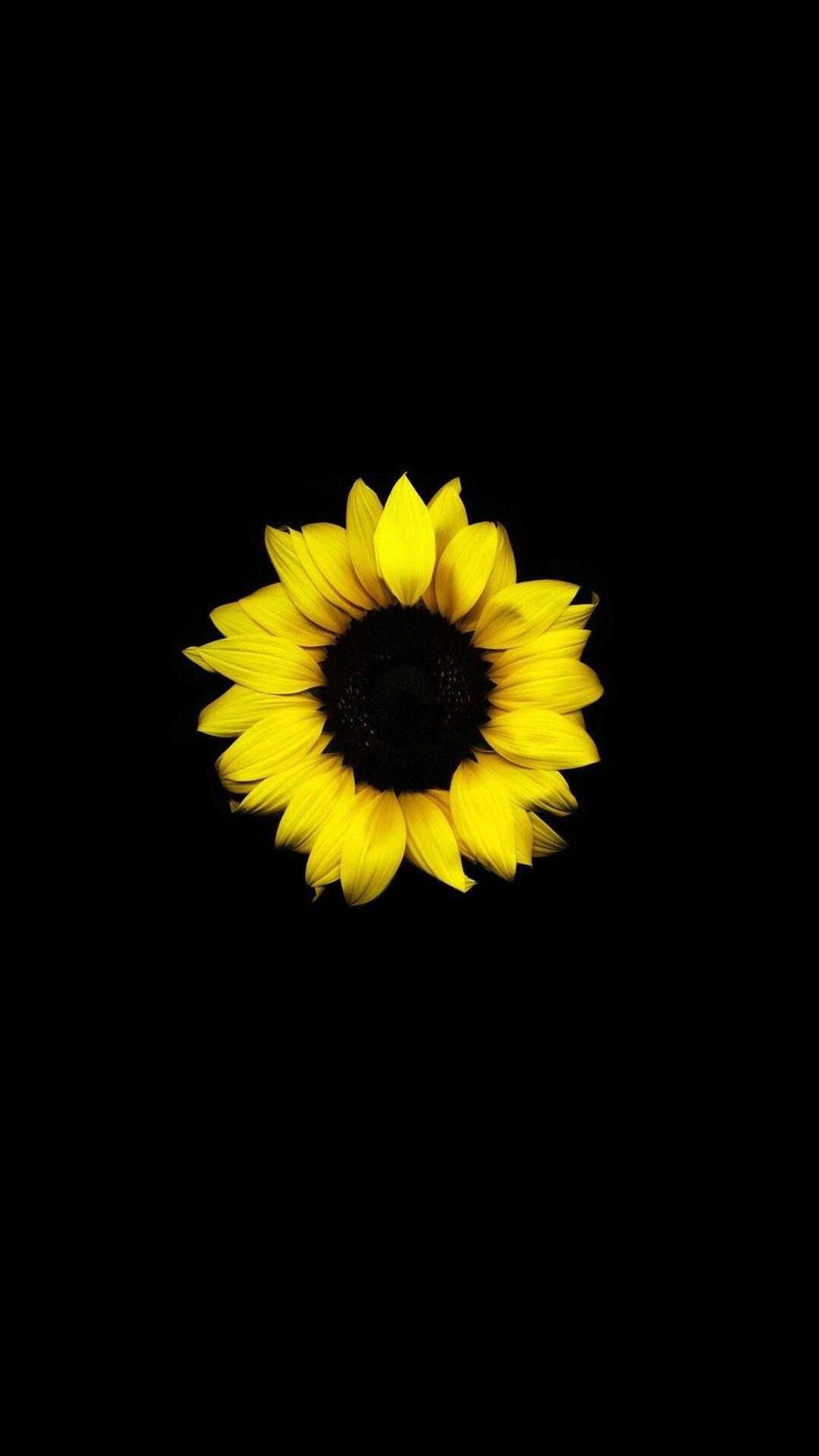 Black Background Aesthetic Black Background In 2020 Sunflower Iphone Wallpaper Sunflower Wallpaper Flower Wallpaper