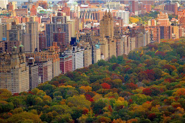 Fototapete »Central Park«, in verschiedenen Größen photowallpaper #coolwallpaper #wallpapermurals #centralpark #autumntrees #aerialview #beautifulworld #sanfranciscoskyline #royaltyfreestockphotos