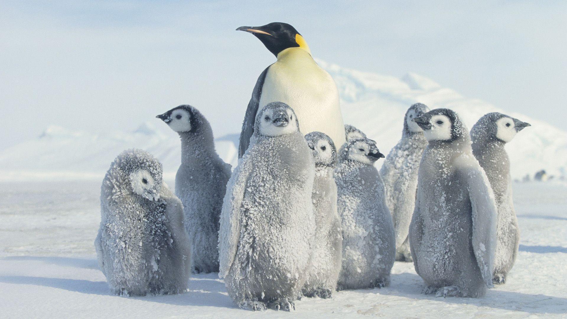 Pin By Mark On Arcticitcra Penguin Wallpaper Penguins Pet Birds