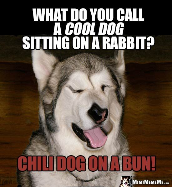 Dog Riddle What Do You Call A Cool Dog Sitting On A Rabbit Chili