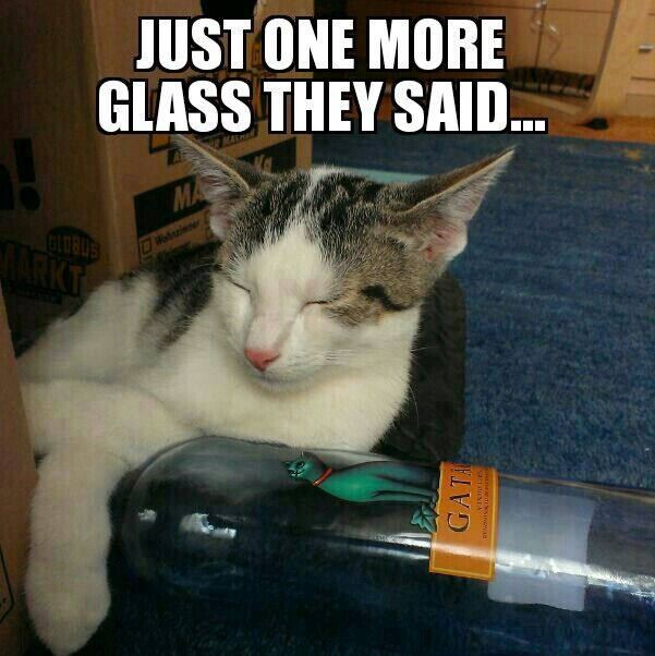 Too Much Wine Last Night Cat Meme Hang In There Pinterest