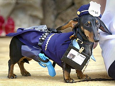Event Lets Proud Owners Parade Pets The Honolulu Advertiser Wiener Dog Dachshund Pets