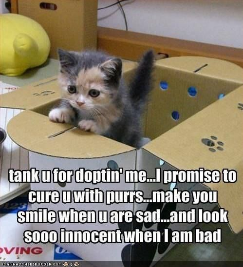 The Ultimate Kitten Dump #adorablekittens