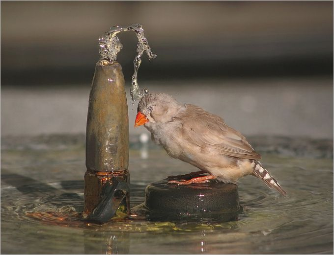 I hate showers ! | bird, motion, water