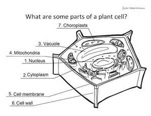 Education chart of biology for animal cell and plant cell diagram ...