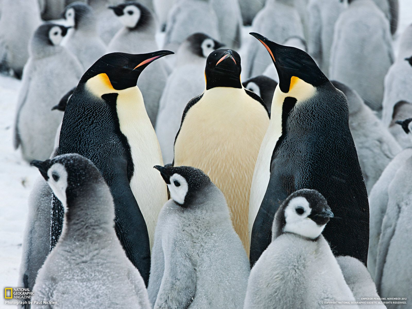 15 Amazing Animals That Start With The Letter E Emperor Penguin Penguins Penguin Pictures