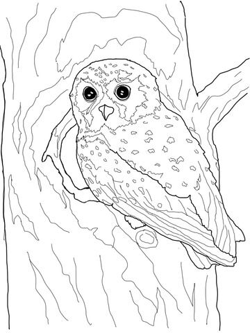 Elf Owl Coloring Page Bird Coloring Pages Owl Coloring Pages
