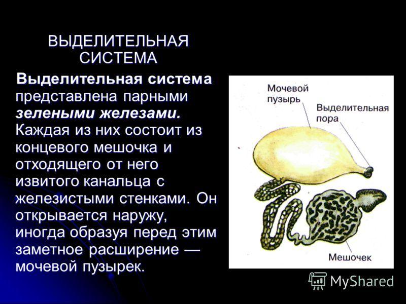 Новошинский сборник задач по химии 9 класс онлайн бесплатно