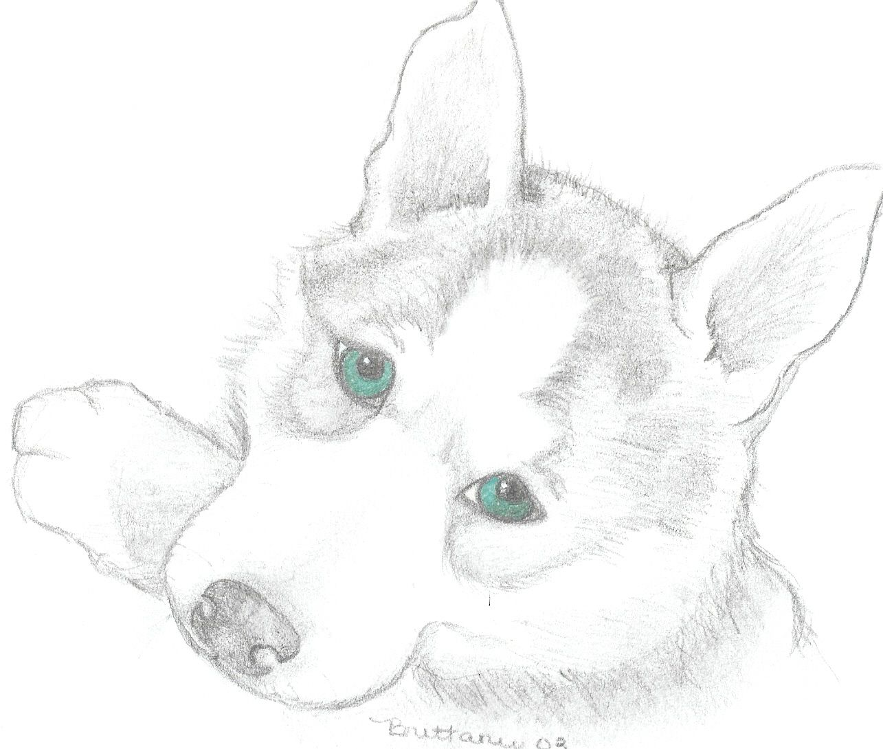 Siberian Husky Puppies Coloring Pages | Molly | Pinterest | Hunde