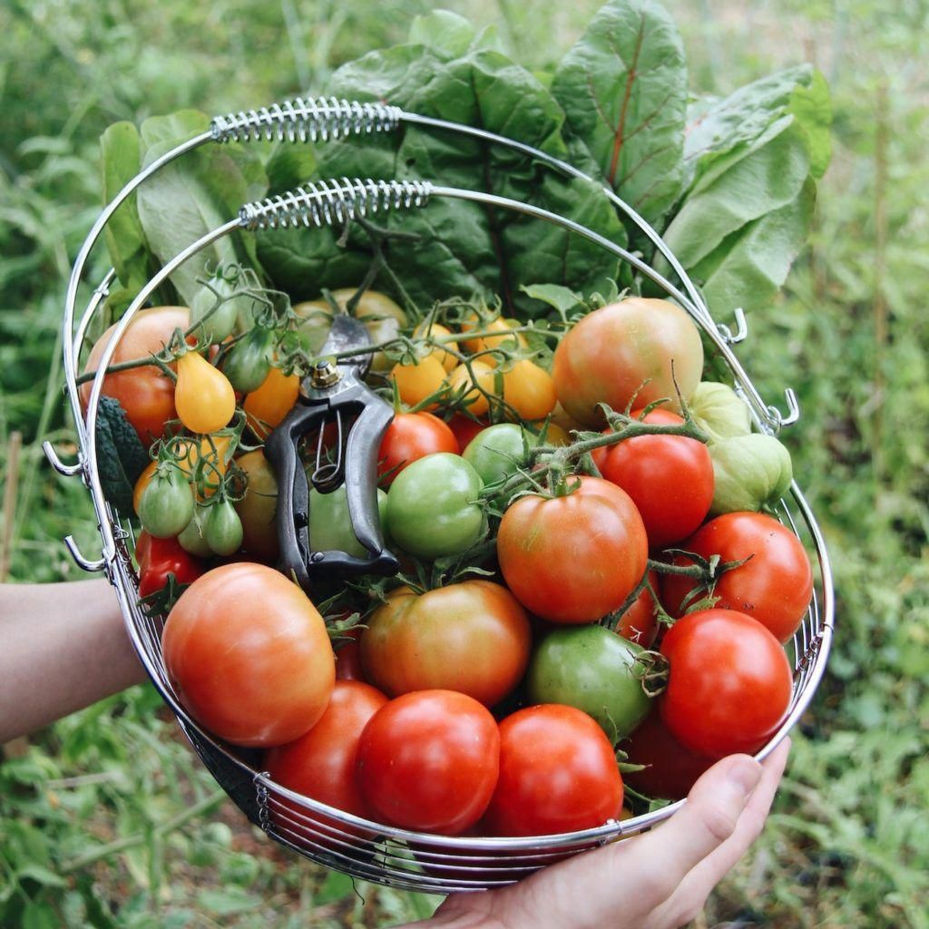 Creating Our First Vegetable Garden Advice Please: 5 Vegetables You Can Grow To Save Money On Your Groceries