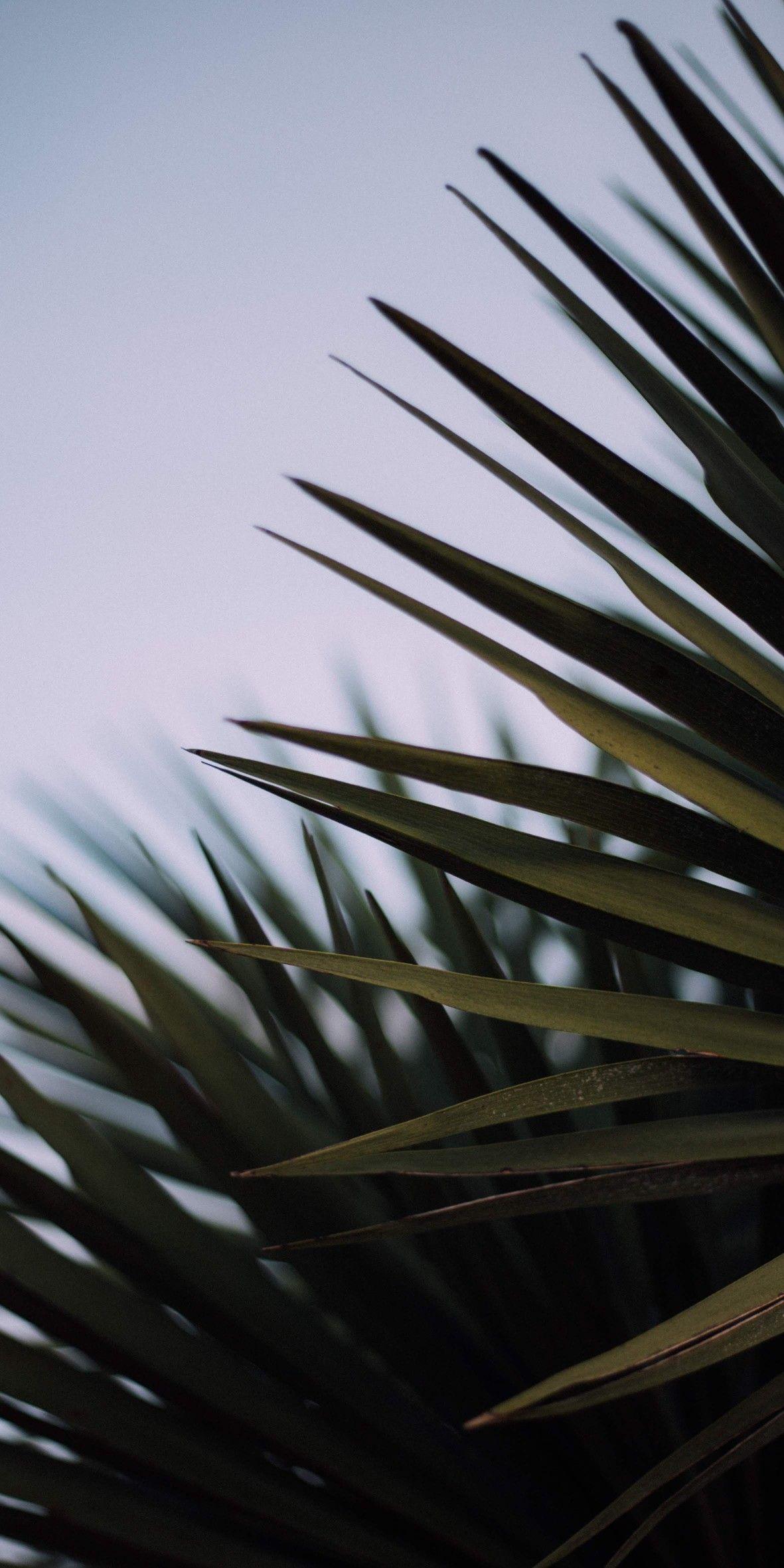 Обои пальмовые листья пальма wallpaper iPhone lockscreen leaves #iphonelockscreen