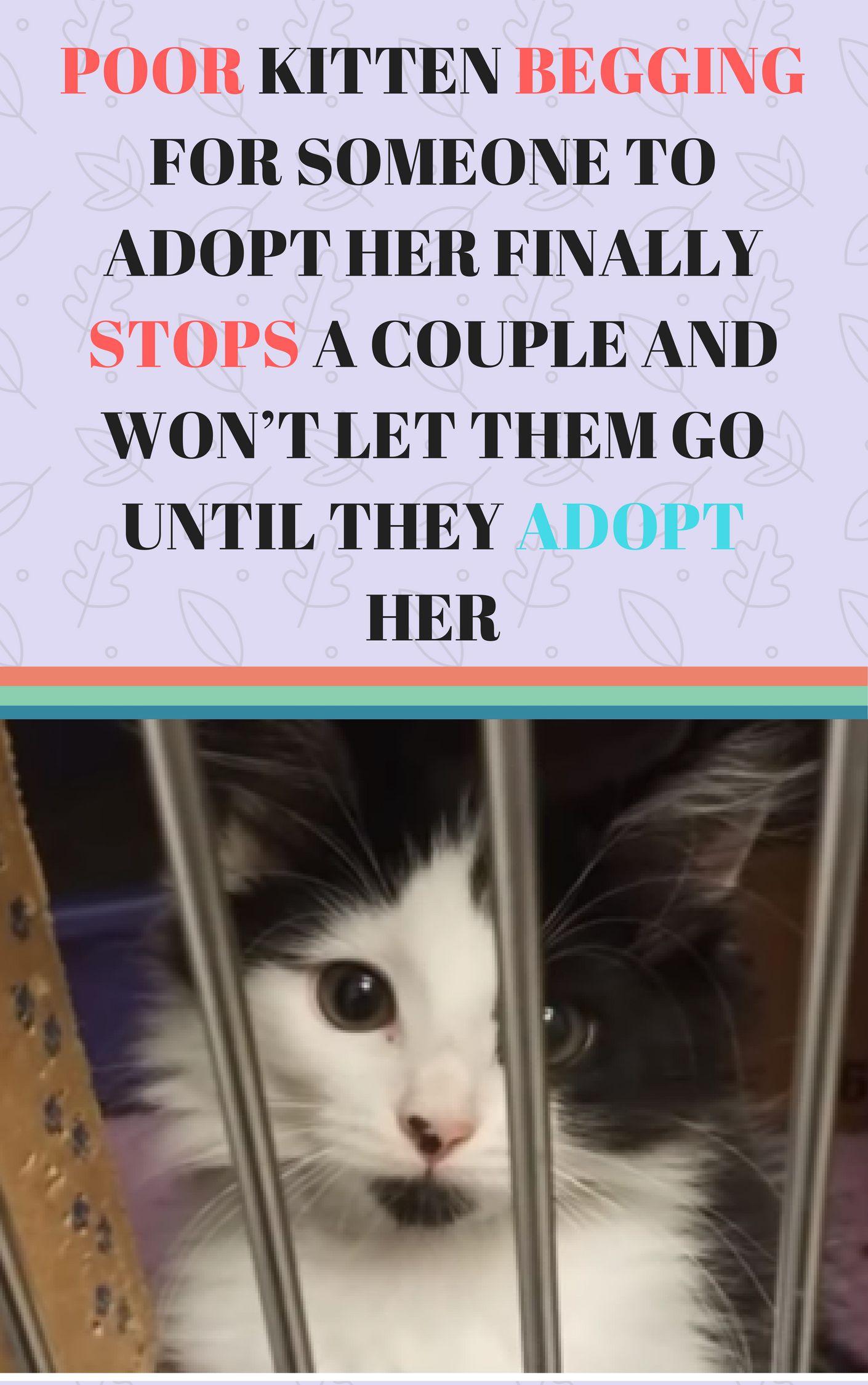 Poor Kitten Begging For Someone To Adopt Her Finally Stops A Couple And Won T Let Them Go Until They Adopt Her Cats And Kittens Stories Cats And Kittens Cute Baby