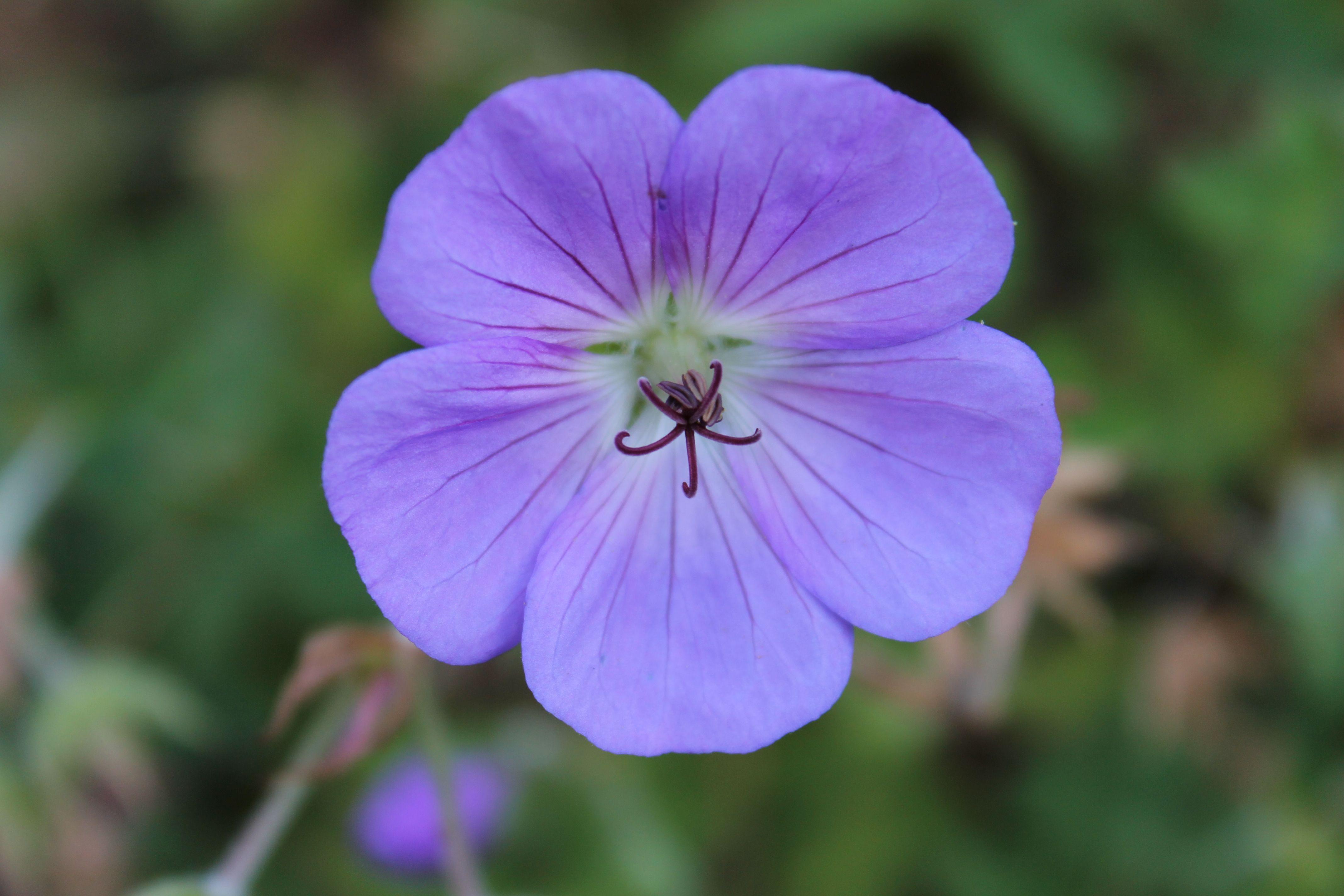 Very Beautiful Flowers Very Beautiful And True And Id Like To