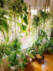 52 Beautiful Indoor House Plants That Are Also Easy To Maintain 5