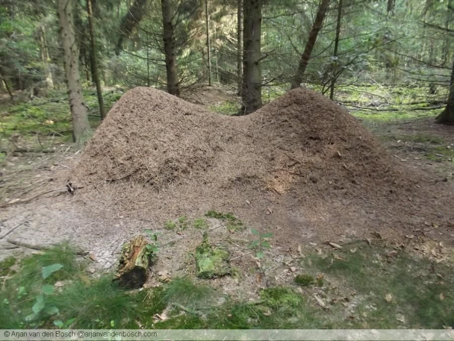 Anthill with some… unique characteristics…
