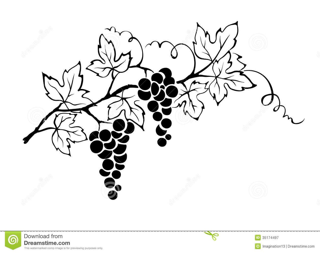 Line Drawing Vines : Grapevine illustration branch bunch grapes g