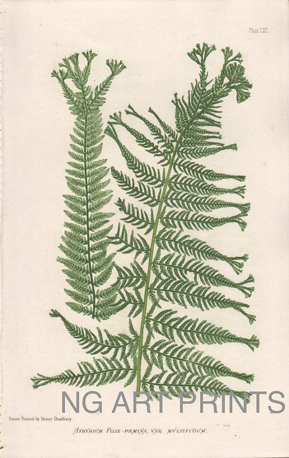 Nature Printed Fern by NGArtPrints, $45.00