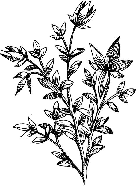 33+ Money plant clipart black and white info