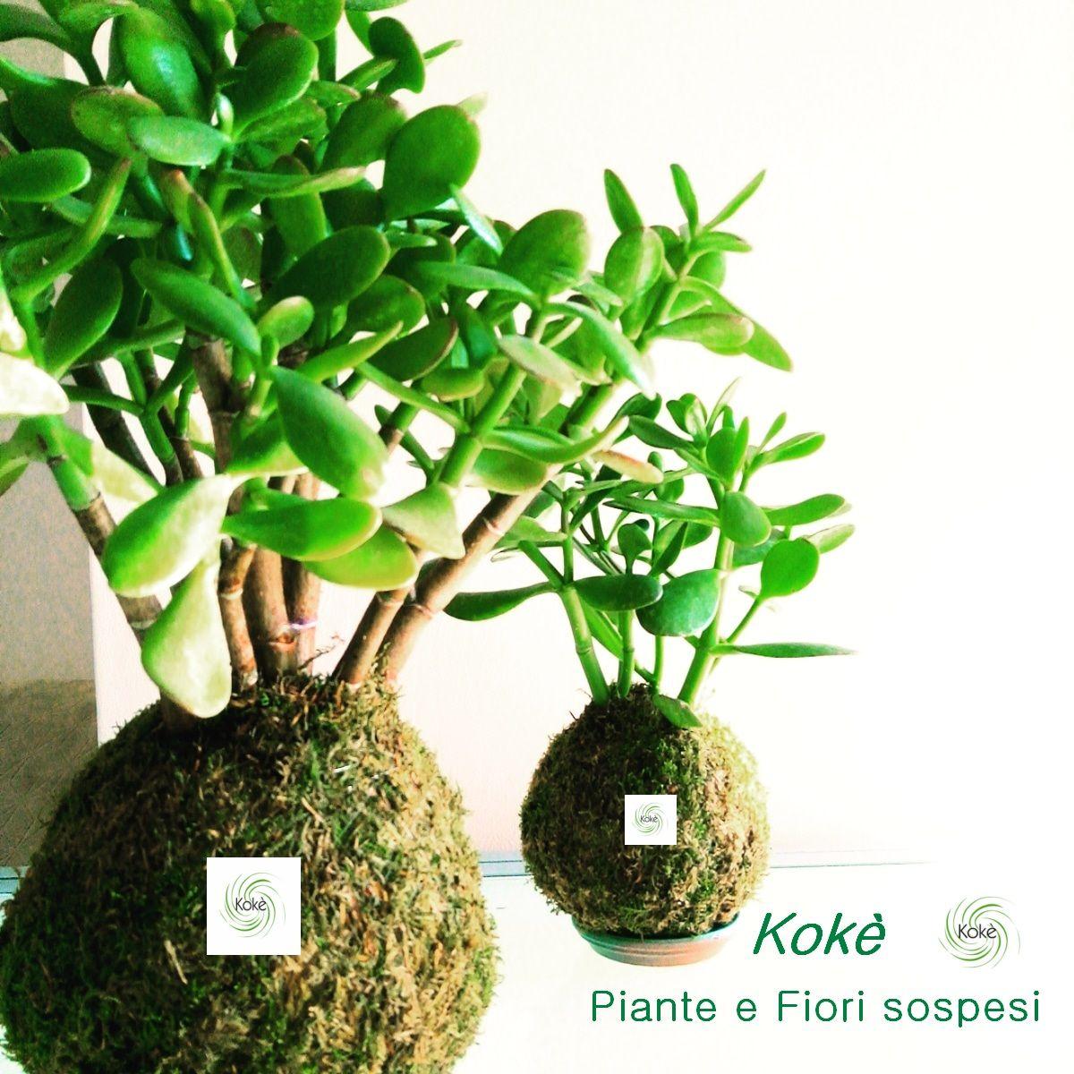 Immagini Piante E Fiori kokedama kokè piante e fiori sospesi scopri l'intera